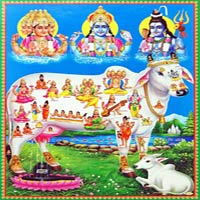 trinity-kamdhenu-sacred-cow-CJ13_l